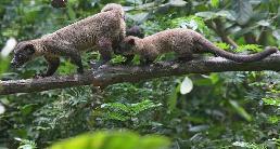 """(国际)(2)新加坡动物园里的""""新生儿"""""""