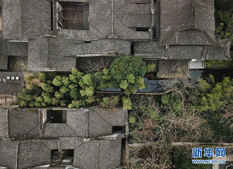 (环境)(6)乌镇春晓