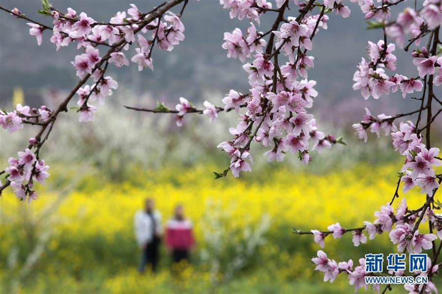 #(环境)(1)花开春天里
