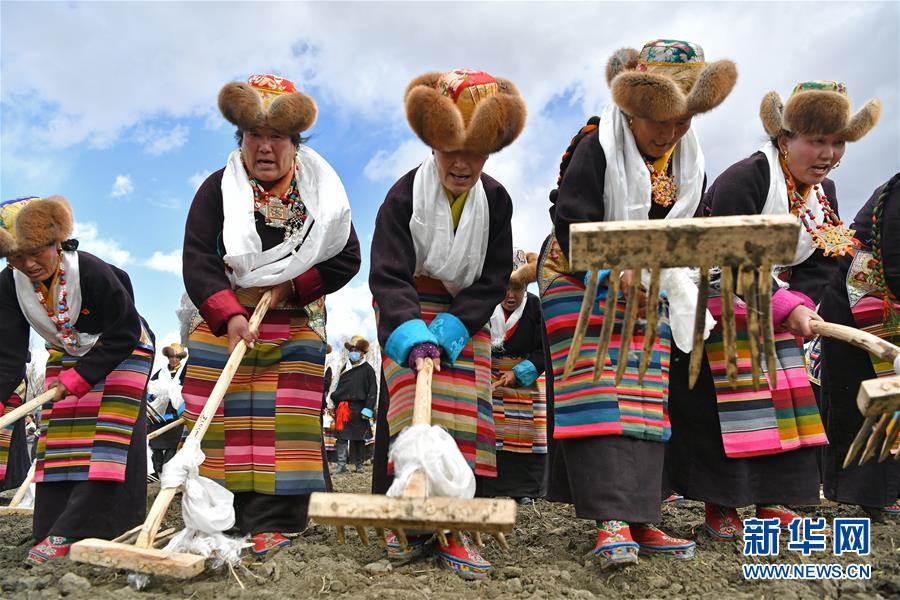 (社会)(5)西藏:载歌载舞迎开耕