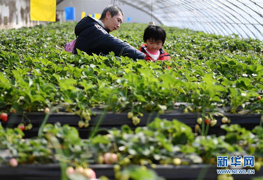 (社会)(1)第七届北京农业嘉年华开幕