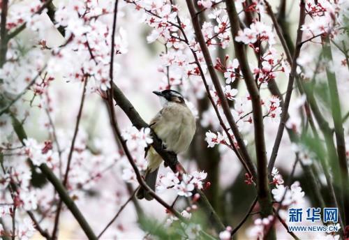 #(春季美丽生态)(3)鸟语花香