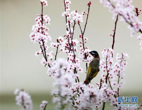 #(春季美丽生态)(1)鸟语花香