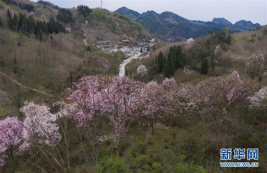 (春季美丽生态)(4)春花烂漫时