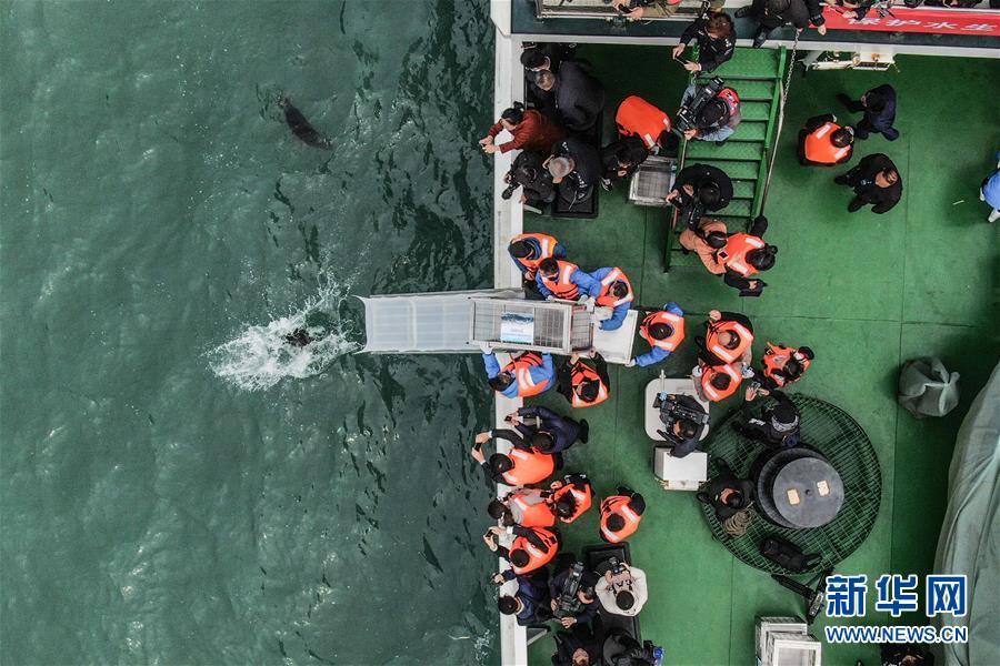 (社会)(1)大连:24只斑海豹被放归大海