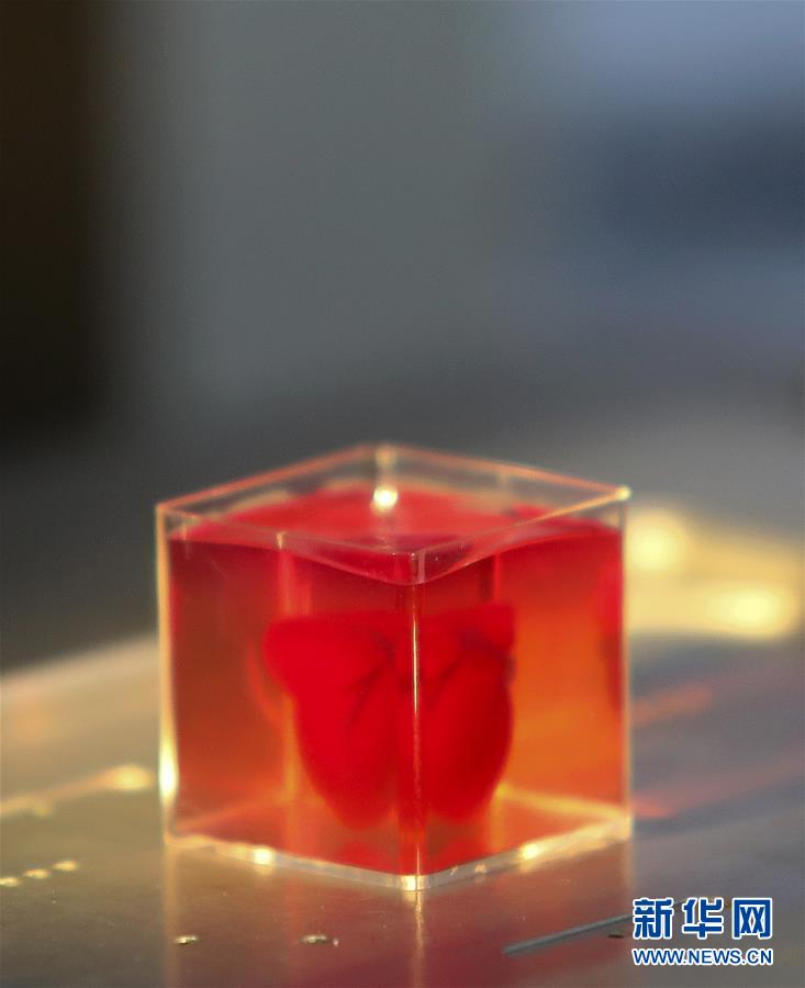 """(国际)(1)以色列研究人员称3D打印出全球首颗""""完整""""心脏"""