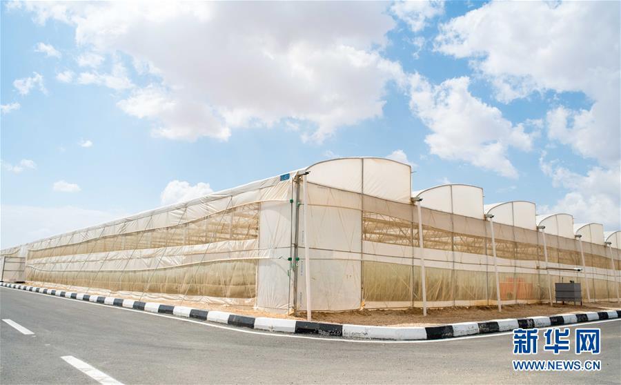 """(国际·""""一带一路""""高峰论坛·图文互动)(1)荒漠正在成为瓜果飘香的绿洲——记中国国机重工埃及现代农业温室项目"""