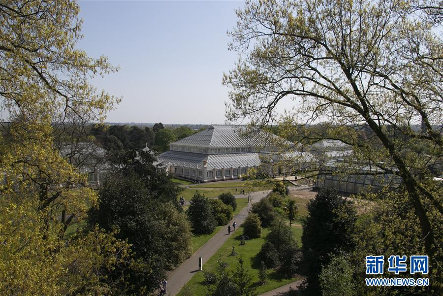 (国际·北京世园会)(3)世界园林巡礼——伦敦邱园