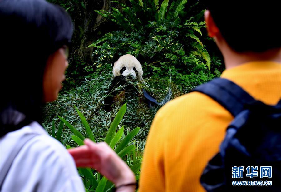 (社会)(4)赠台大熊猫十年迎客两千余万