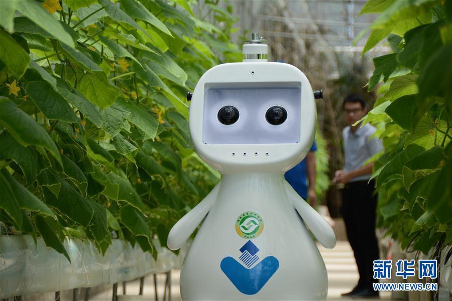 """(图文互动)(1)迈向""""无人农场""""——福建发布人工智能农业机器人"""
