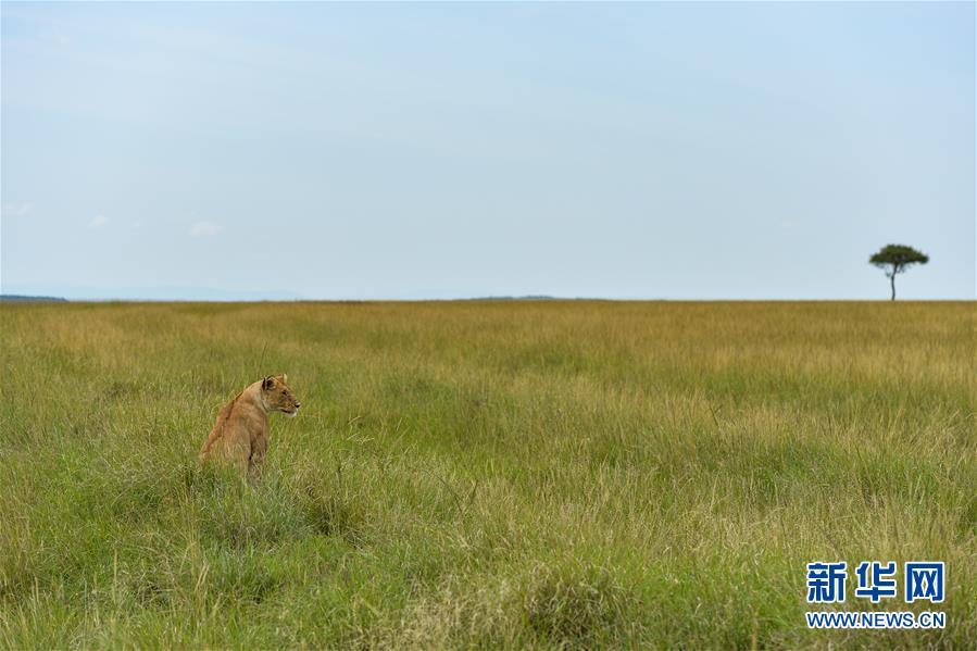 (国际)(1)肯尼亚马赛马拉国家保护区掠影