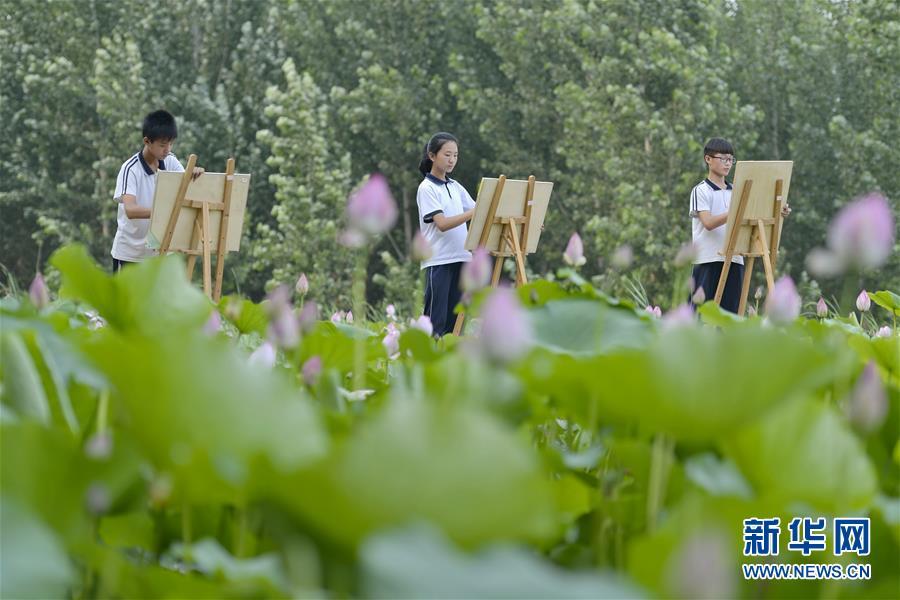 (社会)(1)河北威县:夏荷飘香入画来