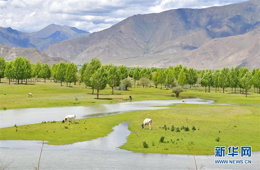 (环境)(1)西藏:拉林公路夏日美