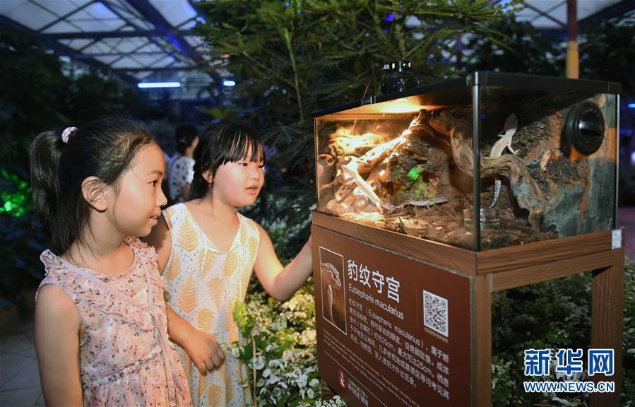 (社会)(1)北京:夏夜中探寻神奇动物