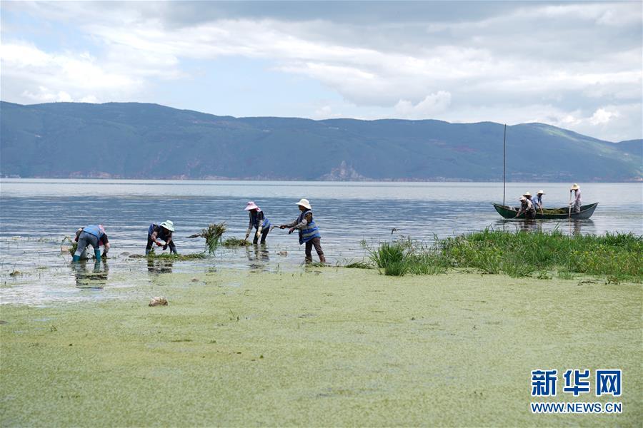 (环境)(1)大理洱海水质总体向好