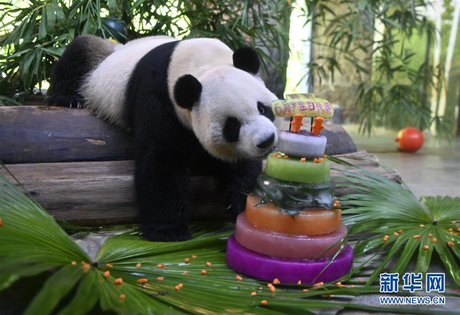 """(社会)(1)大熊猫兄弟的""""生日派对"""""""