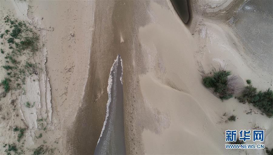 (图文互动)(1)回荡在南疆大地的绿色颂歌——新疆塔里木河流域综合治理综述