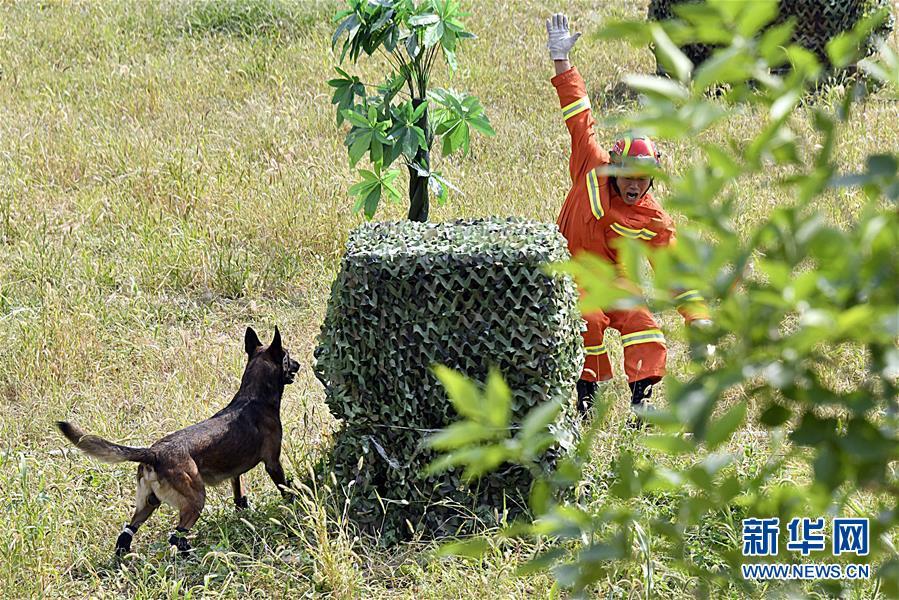 (社会)(1)全国消防救援队伍搜救犬技术比武在济南举行