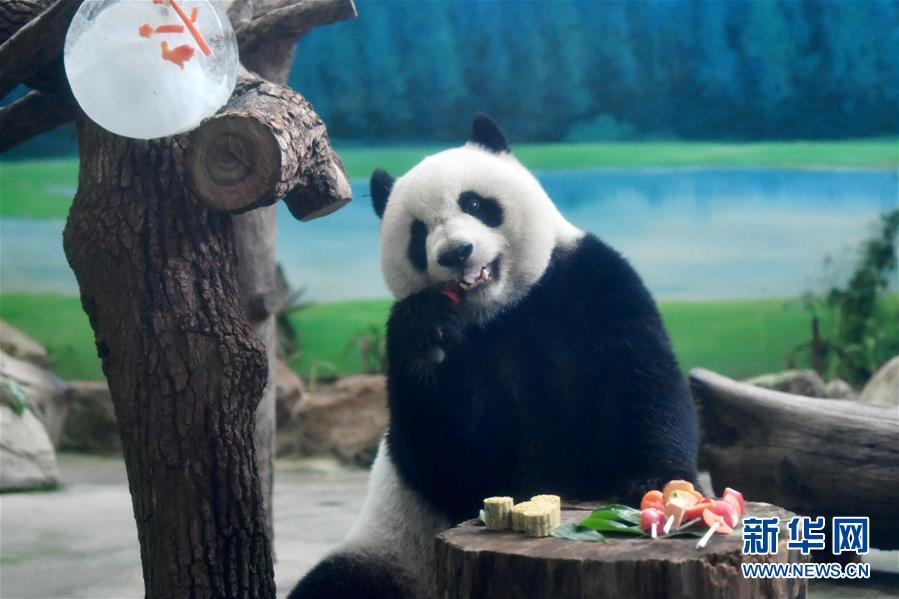 """(社会)(1)大熊猫吃""""月饼""""过中秋"""