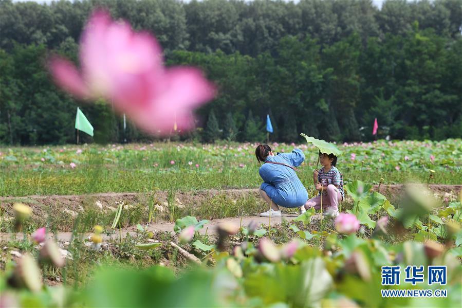 (经济)(10)发展美丽经济 助推乡村振兴