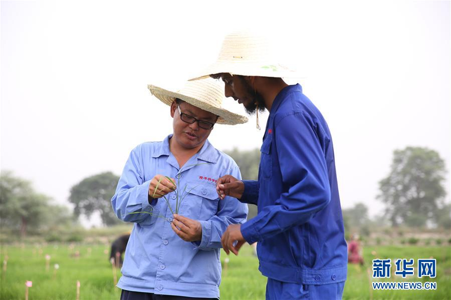 (国际·图文互动)(2)通讯:达则兼济天下——记在巴基斯坦教授杂交水稻技术的中国专家