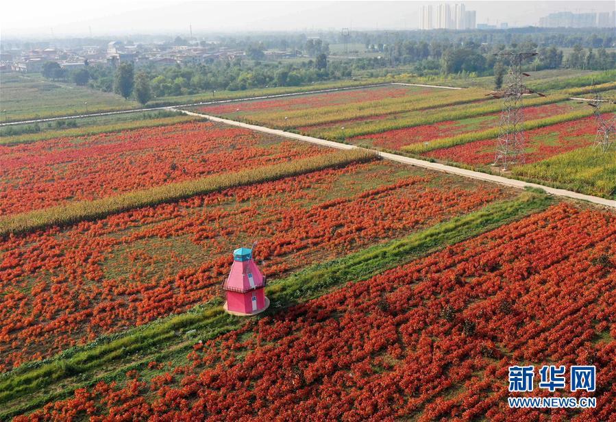 (社会)(1)山西太原:花卉产业助增收