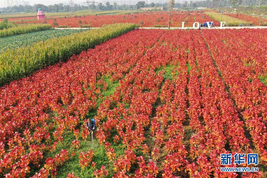 (社会)(2)山西太原:花卉产业助增收