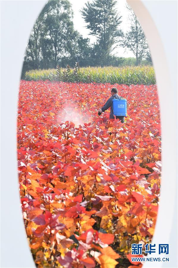(社会)(3)山西太原:花卉产业助增收