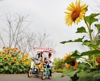 (环境)(4)花开秋意浓