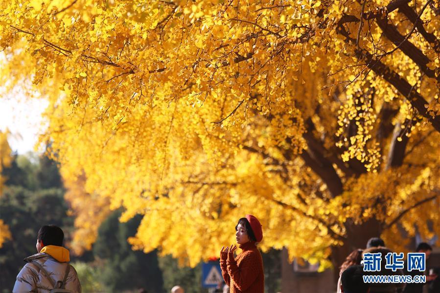(环境)(1)赏秋清华园