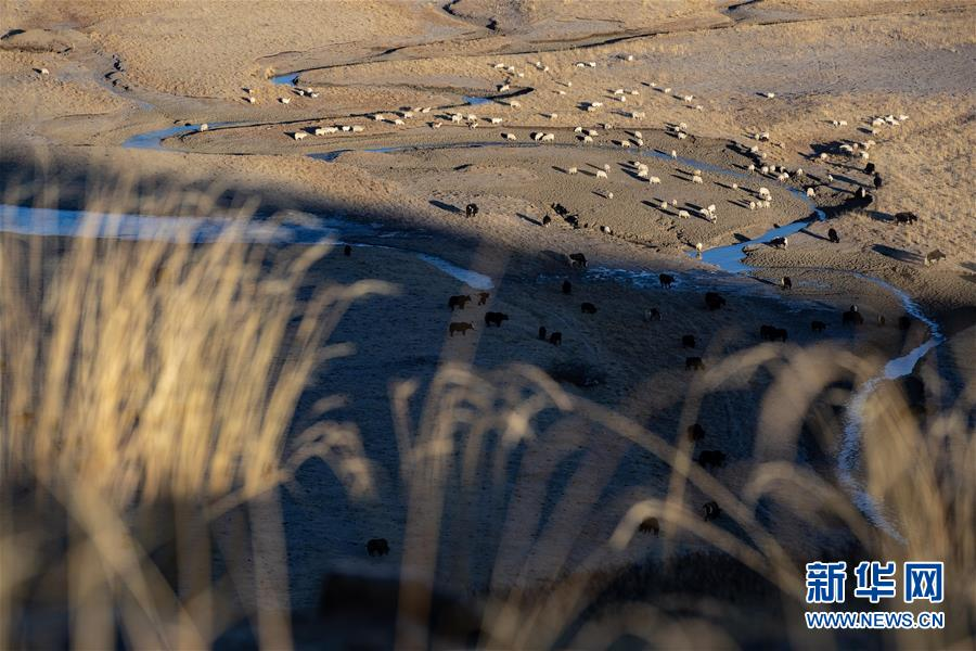 (图文互动)(1)通天河畔 石渠牦牛生态路