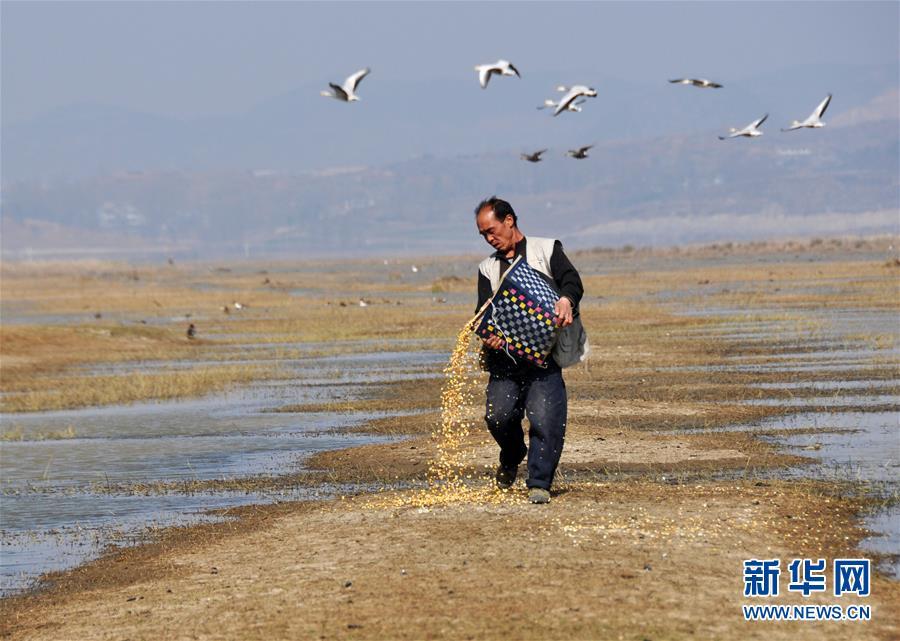 """(来自一线的调查报告·图文互动)(1)擦亮""""高原明珠""""——贵州草海国家级自然保护区综合治理见闻"""