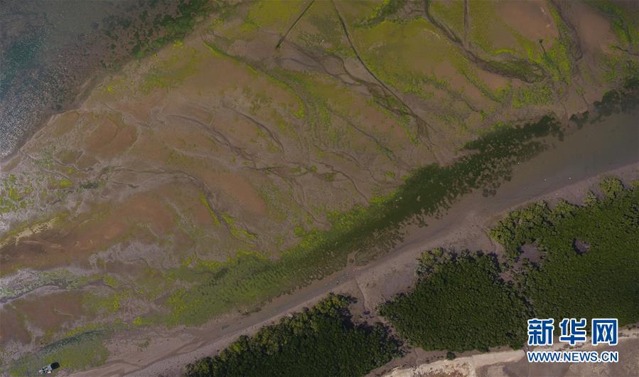 (环境)(1)海南将加强红树林保护修复