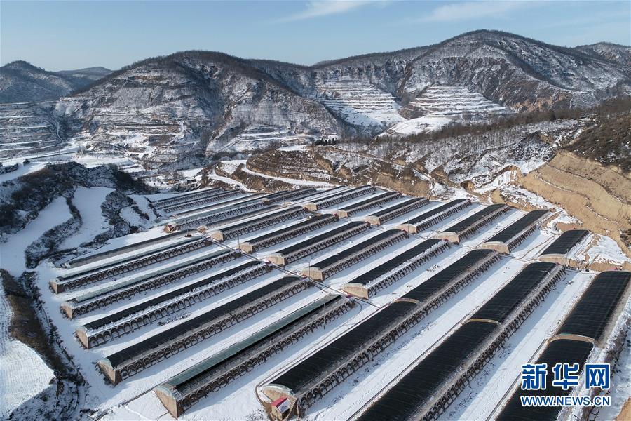 陕西延安:设施农业助增收