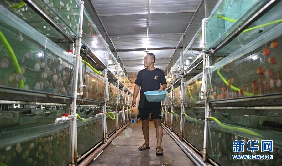 (走向我们的小康生活)(1)辽宁鞍山:观赏鱼养殖富农家