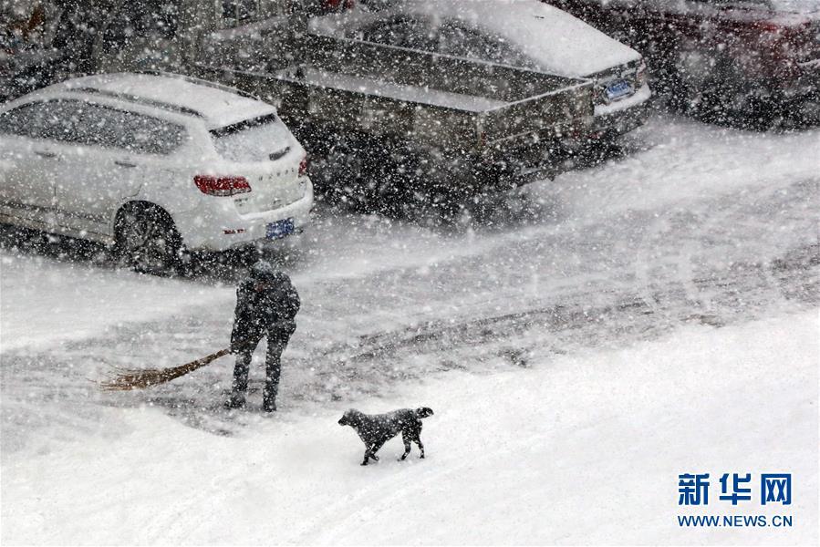 #(环境)(1)山东烟台:小寒时节雪花飘
