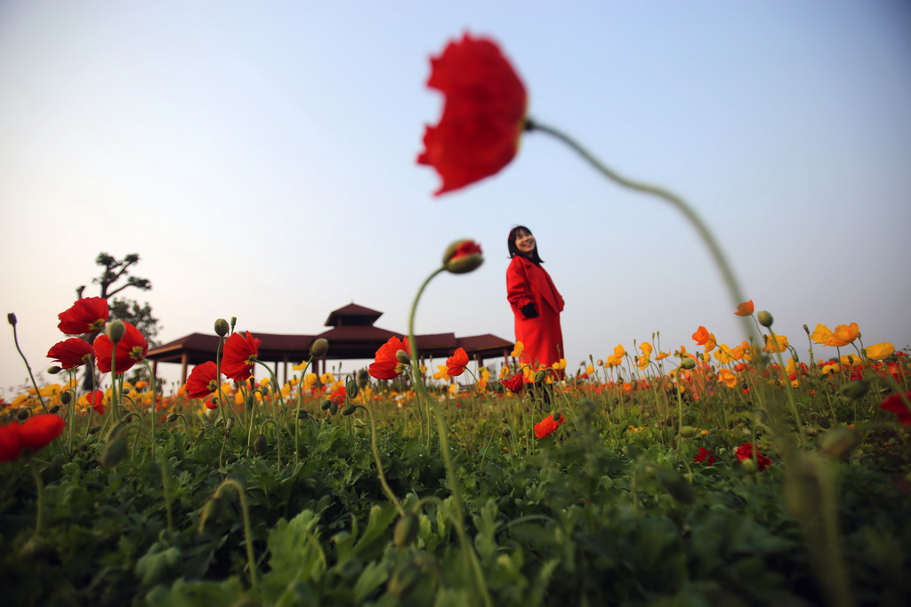 2月18日,游人在福建省厦门市园博苑景区内观景赏花。新华社发(曾德猛 摄)