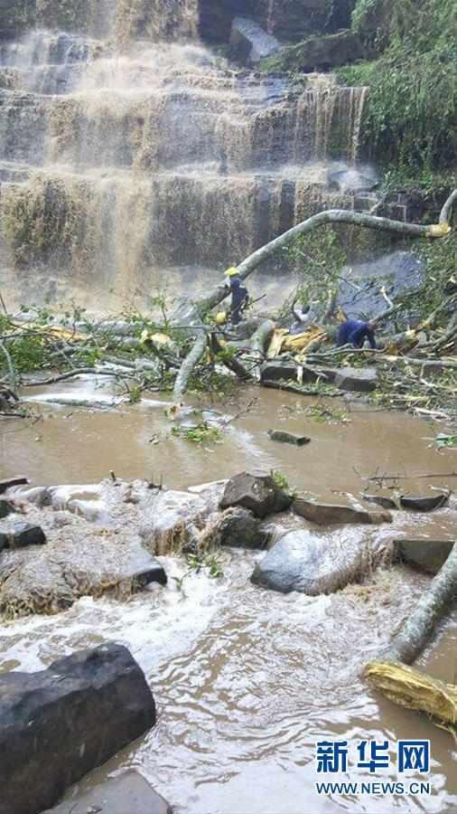 (国际)加纳一瀑布景区发生大树倒塌事故至少16人死亡