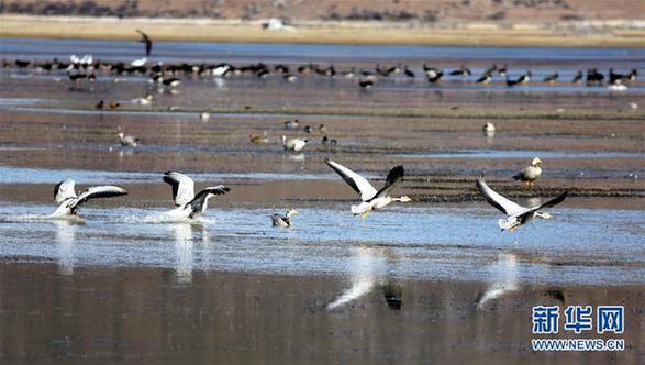 #(环境)(1)云南迪庆:冬季观鸟引客来