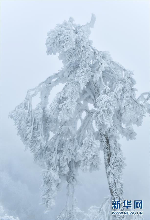 """#(视·觉)(1)湖北恩施:""""冰雕""""森林"""
