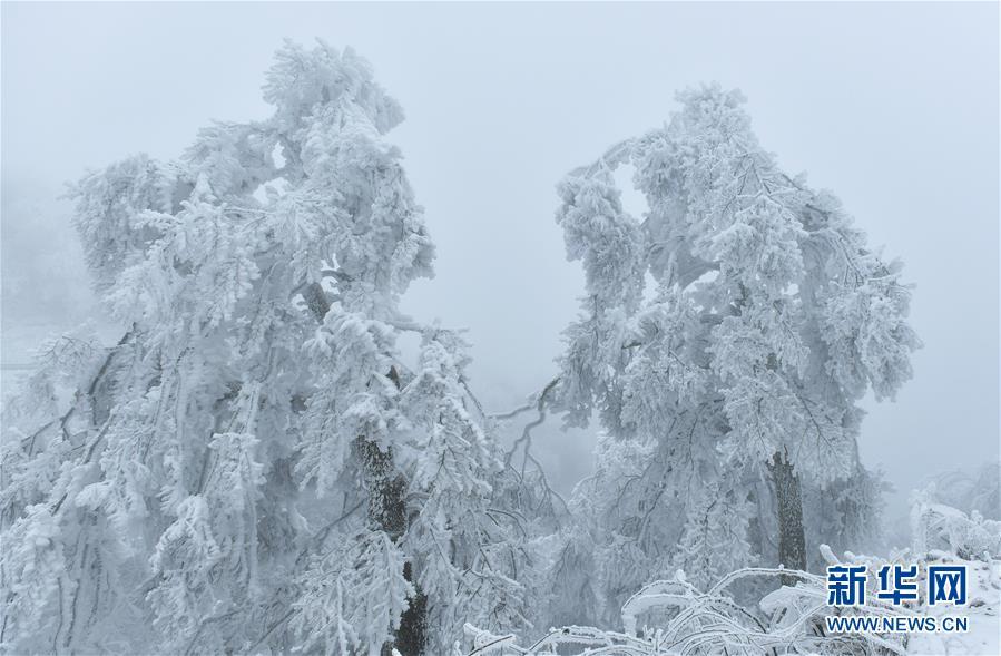 """#(视·觉)(2)湖北恩施:""""冰雕""""森林"""