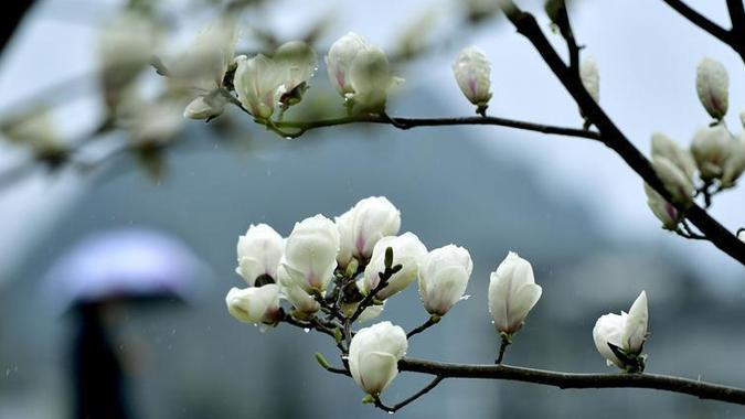 #(环境)(3)花开三月