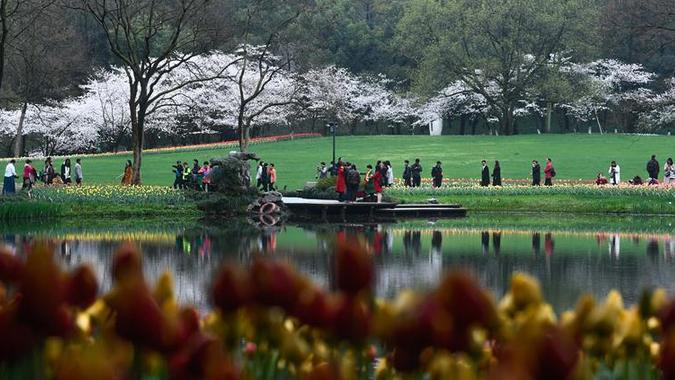 (春季美丽生态)(6)西子湖畔 鲜花烂漫