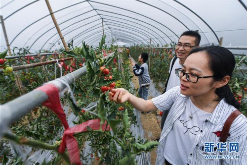 """(经济)(3)""""农园新景""""助力乡村旅游产业"""