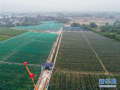 """(经济)(4)""""农园新景""""助力乡村旅游产业"""