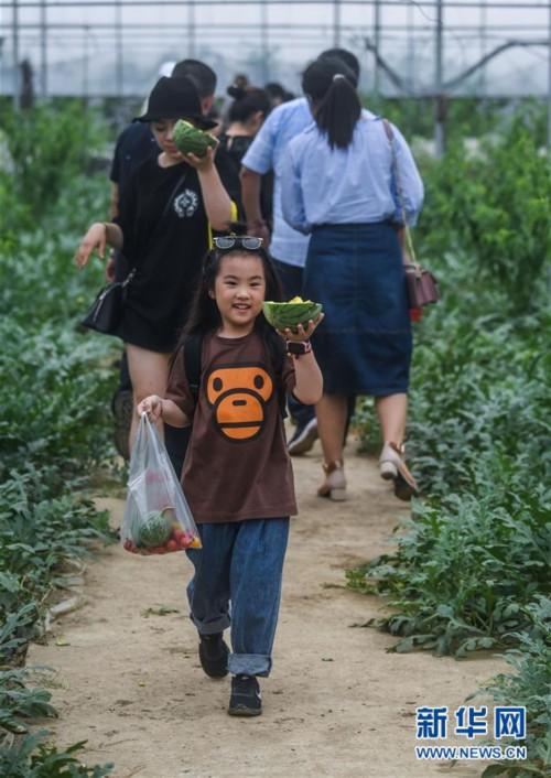 """(经济)(6)""""农园新景""""助力乡村旅游产业"""