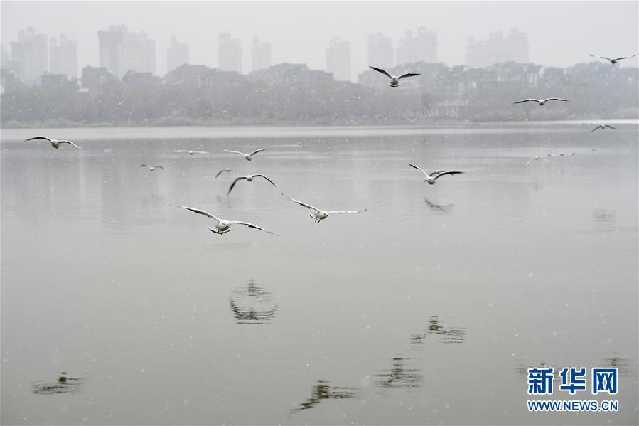 (环境)(1)银川迎来入冬后首场降雪
