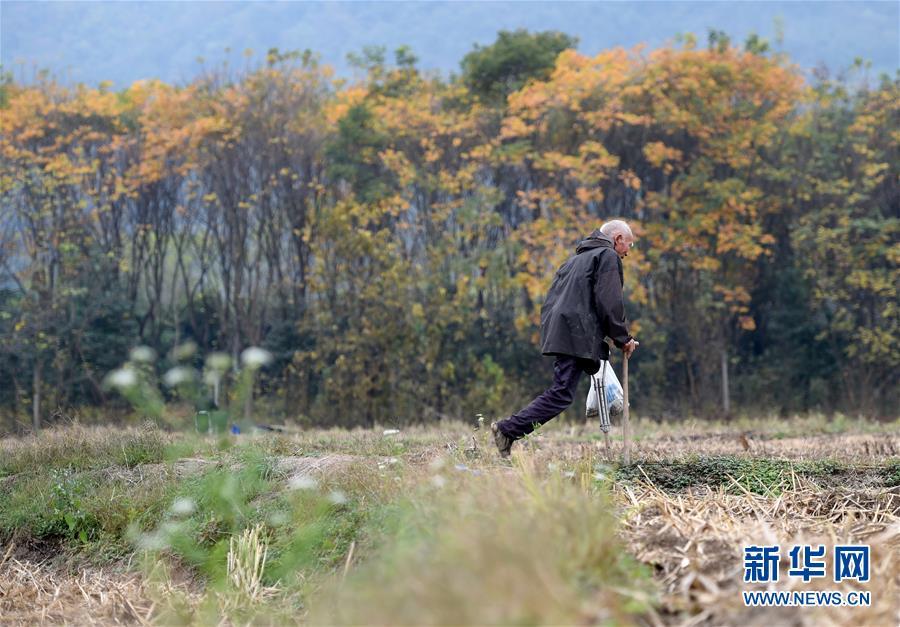 (社会)(1)独腿老人郦礼元:从自立自强到保护环境