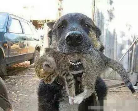 最后出来的时候带出来一只小猫咪   看着这只可爱的小猫咪一脸不谙