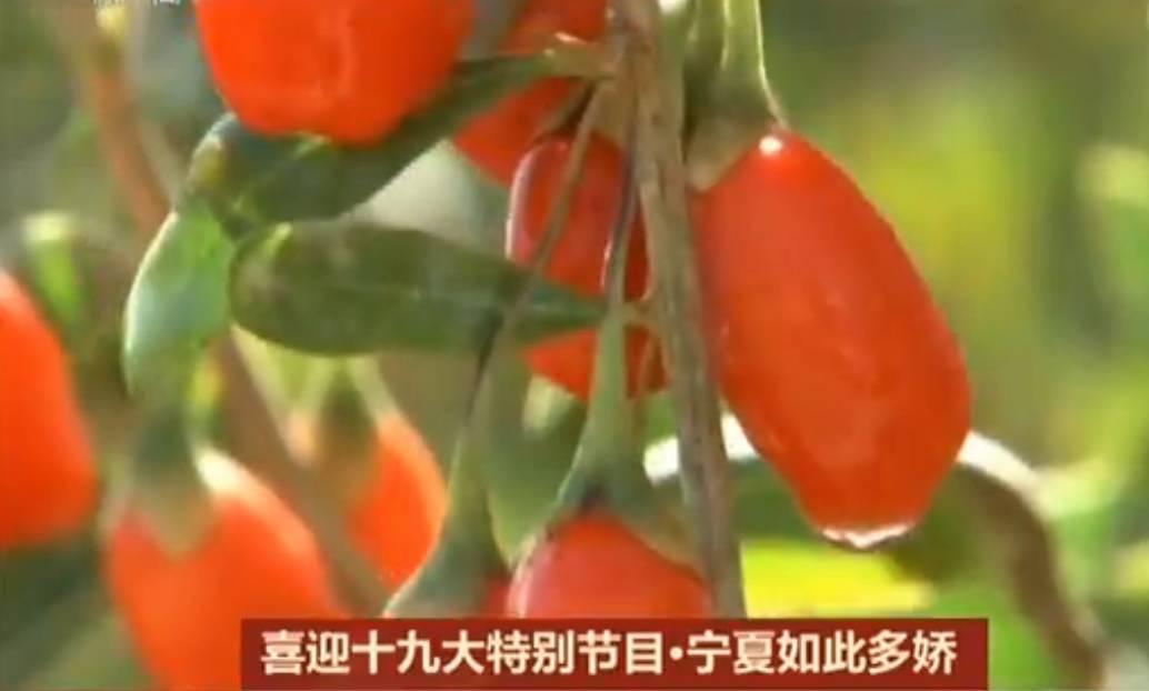 橄榄油代理加盟还看今朝丨新宁夏 真美气